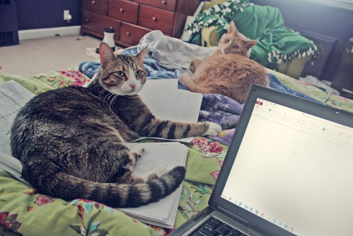 Cats on a bed next to a laptop