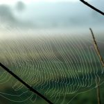 a spiderless web between thin branches, in the early morning light