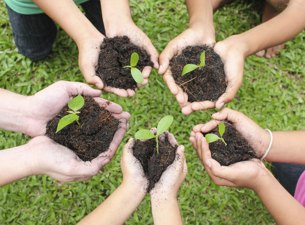 Closeup of people's hands held out in a circle, each cupping a mound of dirt with seedlings