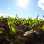 close-up of seedlings in dirt with blue sky in the background