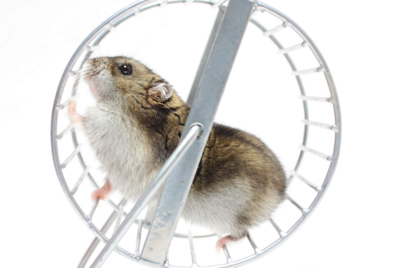 photo of a hamster in a silver wheel with a white background
