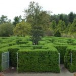 A man stands in the middle of a hedge maze and waves his hand